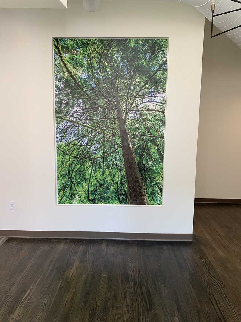 wall graphic of a tree